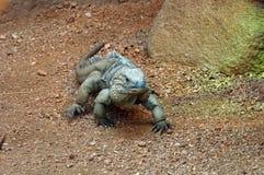 蜥蜴2 库存图片