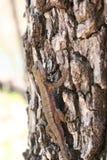 蜥蜴和日志 库存照片