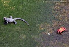 蜥蜴和螃蟹 免版税库存图片