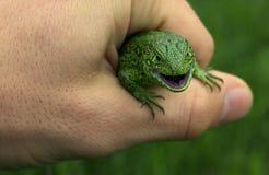 蜥蜴在手上 免版税图库摄影