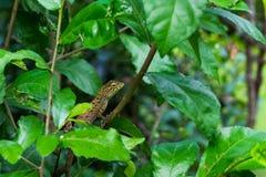 蜥蜴在森林里 库存照片
