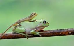 蜥蜴末端青蛙 免版税库存照片