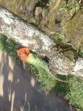 蜥蜴(热带) 库存照片