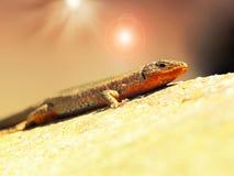 蜥蜴热 免版税库存照片