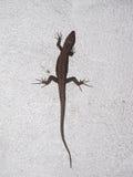 蜥蜴爬行动物动物 免版税库存照片