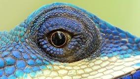 蜥蜴的眼睛 影视素材