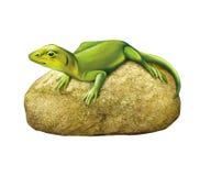 绿蜥蜴石头 免版税库存图片