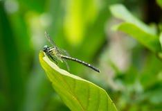 蜻蜓、树和植物在土井Saket 免版税图库摄影