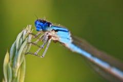 蜻蜓休息 库存照片