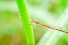 蜻蜓在室外庭院里 免版税库存照片