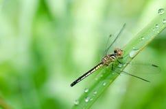 蜻蜓在庭院里 库存图片
