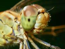 蜻蜓在庭院里 免版税图库摄影