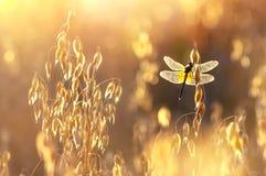 蜻蜓在阳光下 免版税库存图片