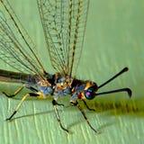 蜻蜓墙壁 库存照片