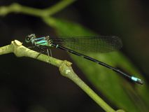 蜻蜓工厂 库存照片