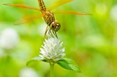 蜻蜓庭院 免版税库存照片