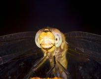 蜻蜓微笑 库存照片