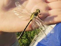 蜻蜓现有量 库存图片
