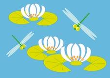 蜻蜓百合 免版税库存照片