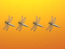 蜻蜓线路 免版税库存照片