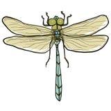 蜻蜓绘画 免版税库存照片