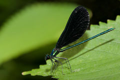 蜻蜓绿色叶子 库存照片