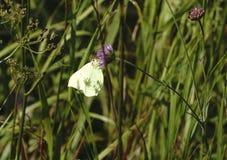蜻蜓,在草的一只蝴蝶 库存照片