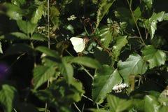 蜻蜓,在草的一只蝴蝶 库存图片