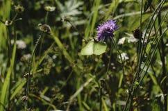 蜻蜓,在草的一只蝴蝶 免版税库存照片