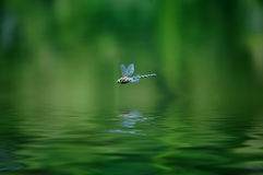 蜻蜓 免版税库存图片