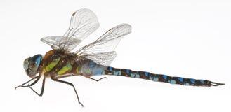 蜻蜓 免版税图库摄影