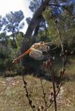 蜻蜓024 库存图片