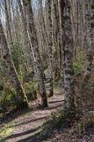 蜿蜒的足迹 图库摄影