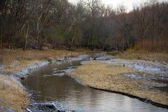 蜿蜒通过森林的小河 免版税图库摄影