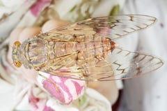 蝉在北泰国 库存照片