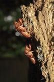 蝉壳附有树干 免版税库存图片