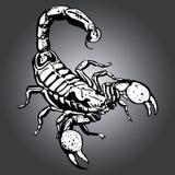 蝎子 库存图片