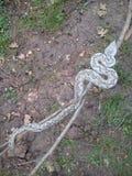 蝰蛇属ursini 图库摄影