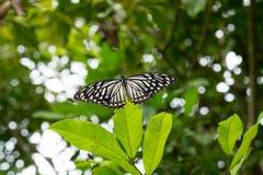 蝴蝶、树和植物在土井Saket 免版税图库摄影