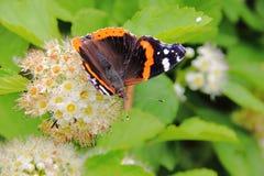 蝴蝶。 花。 免版税图库摄影