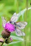 蝴蝶。 花。 库存照片