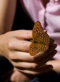 蝴蝶一点 免版税库存图片