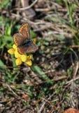 蝴蝶五颜六色的花 免版税库存照片