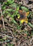 蝴蝶五颜六色的花 库存照片
