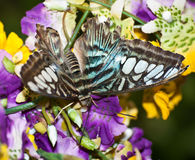 蝴蝶五颜六色的花 免版税库存图片