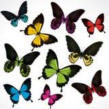 蝴蝶五颜六色的集 库存例证