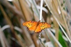 蝴蝶休息! 图库摄影