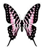 蝴蝶例证 免版税库存照片