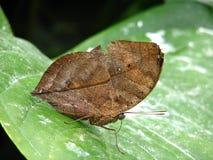 蝴蝶停止的叶子 免版税库存照片