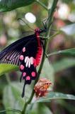 蝴蝶准备飞行到世界 免版税库存照片